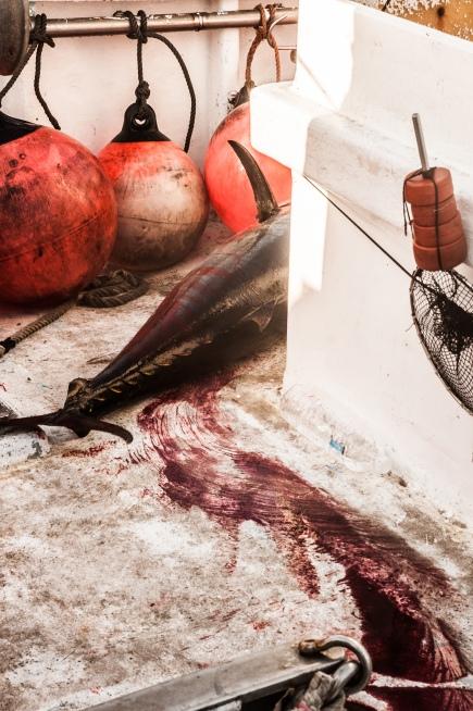 el rastro del atún
