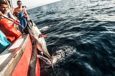 Hombre y atún del Estrecho de Gibraltar