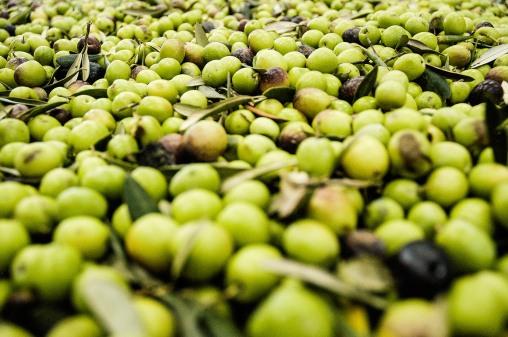 olivas, color de Mercado. foto @anamariamarrero